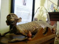display at the cryptozoology museum in Maine
