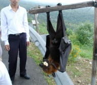 a monster bat if I ever saw one