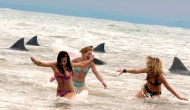 spring break shark attack pic 1