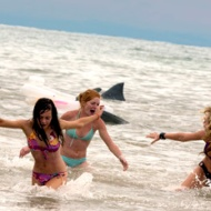 spring break shark attack pic 1