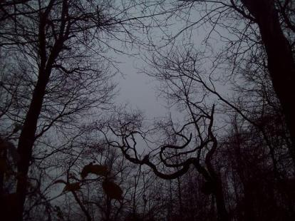 Haunted woods pic 1 - M Knight