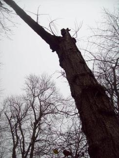 The Witch Hanging Tree pic 2 - M Knight
