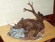 wooly rhino pics 001