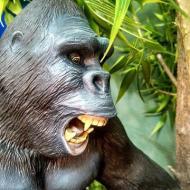 David Dockerty King Kong close up