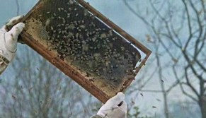 The Deadly Bees pic 23