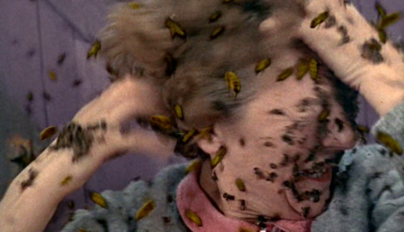 the deadly bees pic 28
