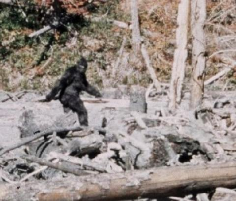 The 1967 Patterson-Gimlin  footage