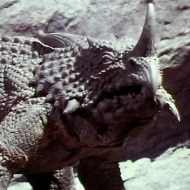 planet of dinosaurs pic 8