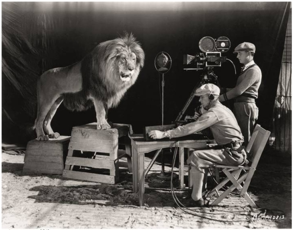 Jackie the lion MGM roar aka Lucky
