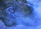 Tiranos Claw 1994 - pic 25