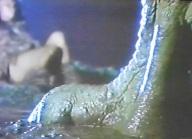 Tiranos Claw 1994 - pic 9