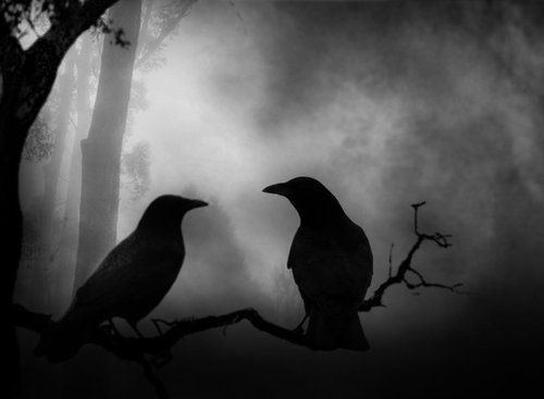 crows by Favim