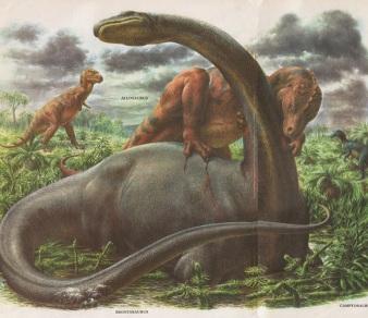 zallinger-brontosaurus-vs-allosaurus