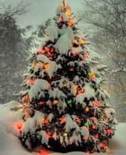 snow-christmas-tree-wide