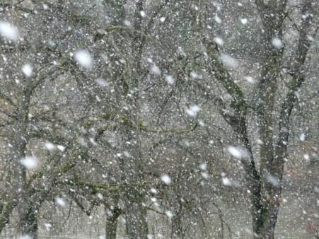 snowfall-16319_1280